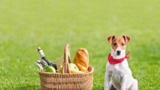 APNA®「愛犬・愛猫の手作り食Q&A」と「老犬・老猫のケアセミナー」開催