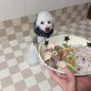 関東で開催します!「犬ごはん入門編と口内ケア」
